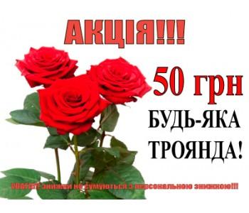 троянды по супер ціні